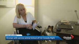 Toronto woman with emotional support dog removed from Air Canada flight