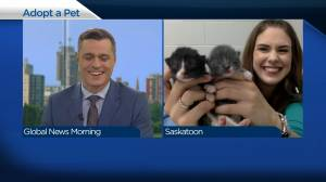 Adopt a Pet: Roxanne and her kittens