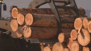 Province announces changes to forest practices code that will see greater participation of First Nations (02:05)
