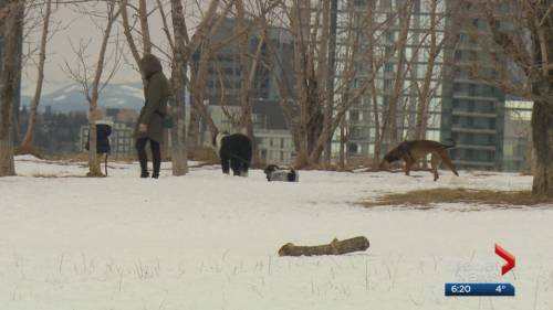 Calgary looking for citizen input on new pet bylaws | Watch News Videos Online