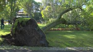 Saint John in cleanup mode as Dorian downs centuries old trees in King's Square