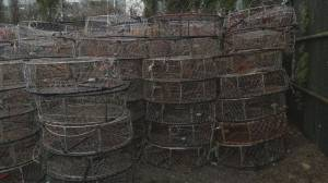 More than 300 'ghost' crab traps pulled from Boundary Bay (01:45)