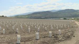 Online dating site creator investing millions into planting vineyards in Vernon