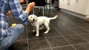 Play video: Puppies, kittens facing online exploitation as demand for pets increases