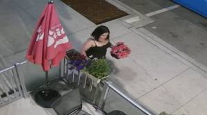 Flower theft caught on camera at South Surrey restaurant