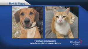 Shelter Pet Project Dec. 13 – Bolt and Ziggy