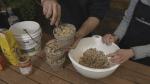 GardenWorks: Bird Feeder