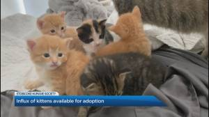 How to help kittens at the Etobicoke Humane Society