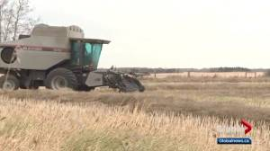 Alberta farmers face more potential problems after trying year