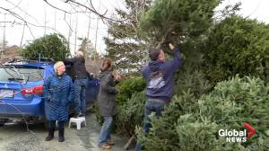 Hope for Wildlife welcomes last-minute donation of Christmas tree donations