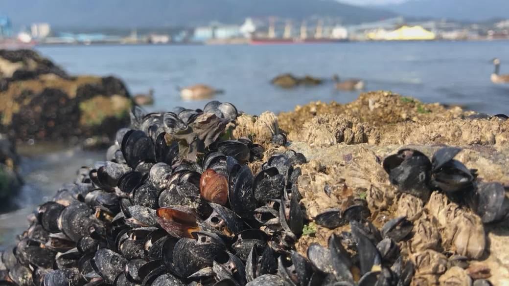 'Extreme vigor   question    liable  for wide    die-off of B.C. seashore creatures'