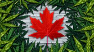 What changes we have seen since cannabis was legalized in Canada