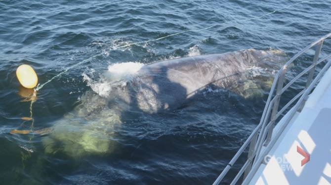 DFO closes part of Bay of Fundy after 5 right whales spotted