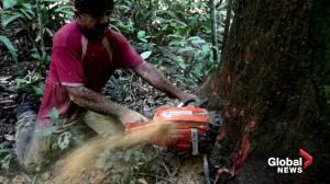 Bolsonaro-backed highway targets heart of Amazon (02:29)