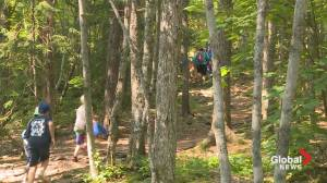 Artists Rally to Help Nature Trust Save Blue Mountain Urban Wilderness (05:50)