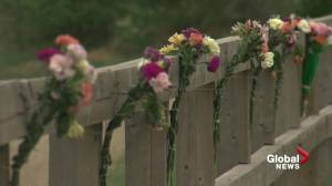 Memorial grows for woman fatally hit by car on sidewalk in northwest Edmonton (01:39)