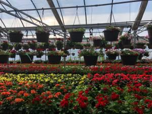 Gardening growing in popularity during coronavirus pandemic