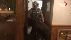 Baby bear takes quick nap in Montana hotel ladies' room