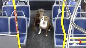Milwukee bus driver saves lost dogs