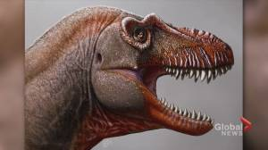 Dinosaur discovery among UCalgary's most-read 2020 research breakthroughs (04:28)