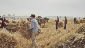 How Albertans can get involved in this year's harvest season