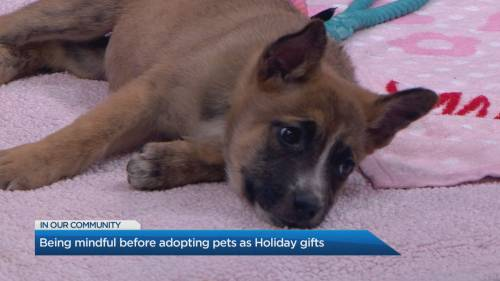 Being mindful before adopting pets as holiday gifts