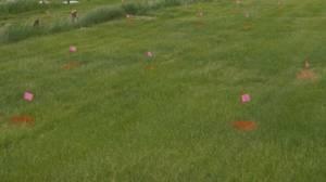 Hundreds of unmarked graves found at former Saskatchewan residential school (02:39)