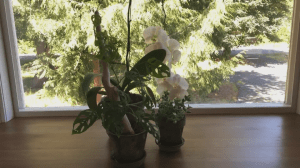 GardenWorks: Indoor Plants