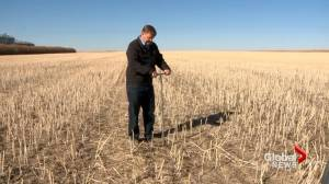 Southern Alberta farmers look to soil moisture levels as spring seeding nears (01:55)