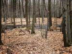 City of Longueuil to cull half of the deer population at local park thumbnail