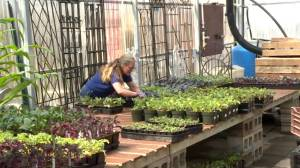 Manitoba garden centres gear up to open during COVID-19 (01:20)