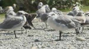 Birds flocking to Atlantic Canada after Hurricane Dorian