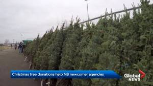 New Brunswick Christmas tree sale supports newcomer agencies (01:51)