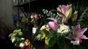 Edmonton flower shop concerned travel restrictions may cut its Valentine's Day supply short (01:46)