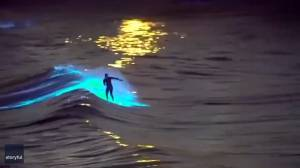 Surfer rides glowing bioluminescence waves off San Diego, California