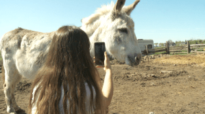 Virtual donkey meet-and-greets help support Uxbridge animal sanctuary