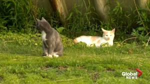 Maritime cat rescue needs more volunteers to control 'staggering' feral cat population