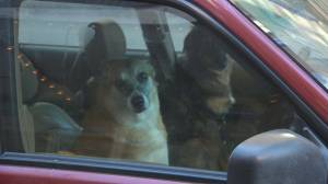 The dangers of leaving your pet in a vehicle during the summer (04:35)
