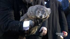 Groundhog Day: Punxsutawney Phil doesn't see his shadow, predicts early spring