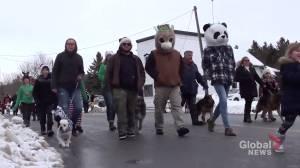 Pet parade in Castleton