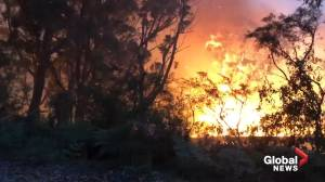 Firefighters battle blazes throughout Greater Sydney, Central Coast