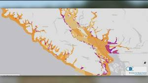 BCCDC warns of potential illness from eating shellfish (00:36)