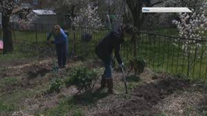The Benefits of Choosing Native Plants for Your Garden (06:23)