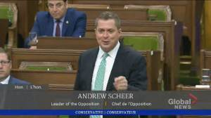 WE scandal: Scheer labels Trudeau's handling of controversy 'gross and disgusting' (05:13)
