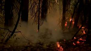 California wildfires: Firefighters working to contain multiple growing conflagrations (01:26)