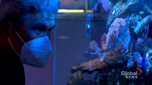 Popularity of aquariums amid pandemic brings Calgary company 'big opportunity for growth' (01:37)