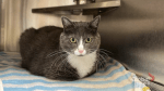 Adopt a Pet: Kitty the cat