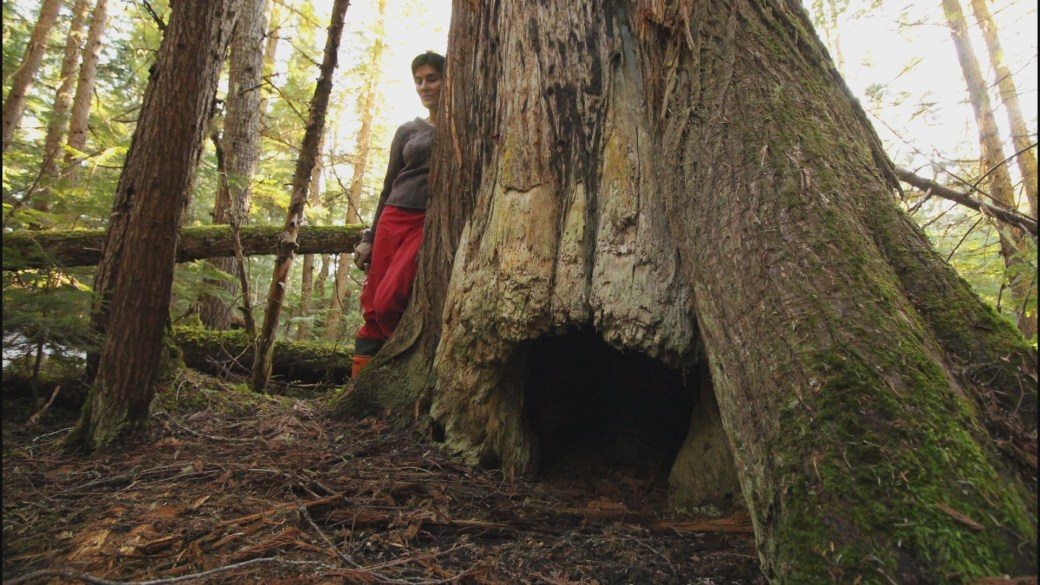 Click to play video: 'Environmentalists cry foul over logging for biofuel company'