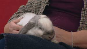 Adopt a Pet: Roger the rabbit