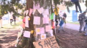 Dozens gather in North Vancouver to save 200-year-old cedar tree (00:42)